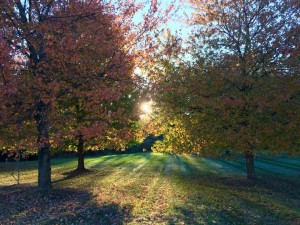 Sunrise through trees with fall foilage
