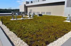 Green roof at UMBC Event Center